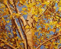 Beech Tree 40x60