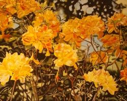 Yellow Azaleas 25x40
