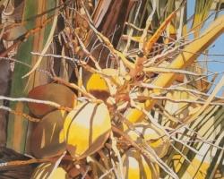 Coconuts 22x30
