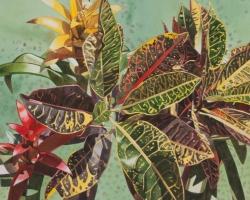 Croton 12x16
