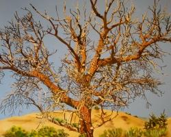 Dead Tree 36x36