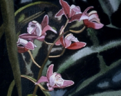 Pink Orchid 7x9