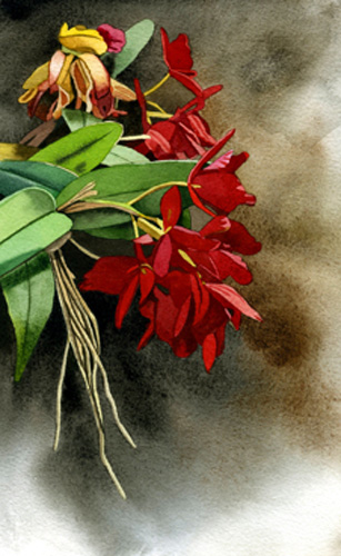 red-orchid-6_5-x-10